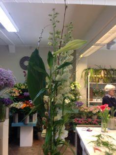 Ordre bukett høy Plants, Plant, Planets