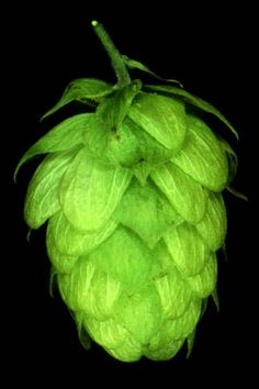hops | lb Carapils (The last beer was a bit thin – this will add ...