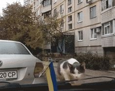 Cat vs. curiosity   gif