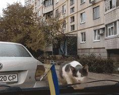 Cat (gif)