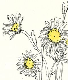 Daisies bouquet line drawing. Ink and yellow watercolour. This is a PRINT of my floral drawing after daisies. The drawing is a minimalist line drawing with black china ink and pen, and I used a note of yellow watercolour so typical from daisies flowers. The print is available in these