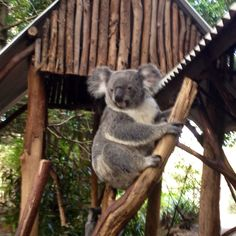 Koala Sanctuary, Brisbane Australian Animals, Before I Die, Mountain Range, Brisbane, Travel Bags, New Zealand, Places To Go, Bear, Island