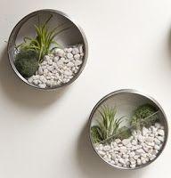 Estos son unos originales maceteros verticales o terrarios en miniatura para colgar en la pared, hechos con latas de atún . Tienen plan...