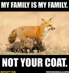 STOP WEARING FUR. ITS NOT YOURS TO WEAR.