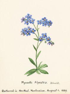 wanderlust and appetite: Botanical Illustrations (tattoo inspiration)