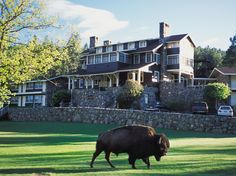At the State Game Lodge in the Black Hills of South Dakota, it's just you, 71,000 acres of nature…and 1,300 free-roaming bison. If you want to improve your chances, Buffalo Safari Jeep Tours leave every day from the lodge. And because the hotel sits within Custer State Park, a premier wildlife sanctuary, bison aren't all you'll see. State Game Lodge, Custer State Park, #SouthDakota $iGottaTravel