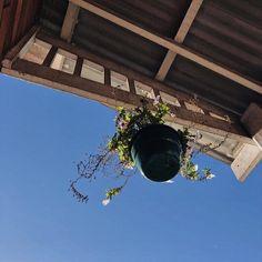 Sky Sea, Bees Knees, The Ranch, Story Inspiration, Small World, Danielle Brooks, Wildlife, Scene, Seasons