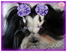 Hairstyle Dog - Model: Shih Tzu Mel