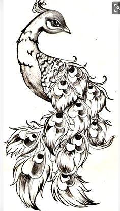 Pencil Drawings Of Peacocks Easy Pencil Drawings Flash Pile In