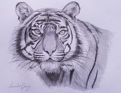 Original pencil drawing 'Tiger' by lavendergeorge on Etsy, £20.00