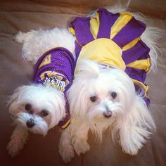 Jazzy & Sophi support the #LSU Tigers!