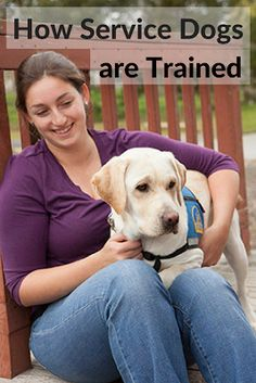 Service Dog Training at Canine Companions for Independence (Q & A)