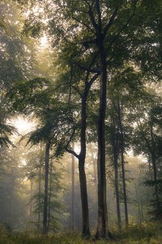 ˚Natural Forest - England