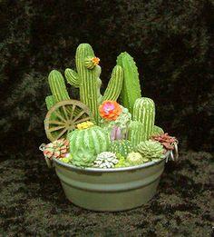 succulents miniature