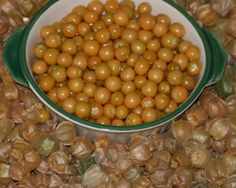 "Cossack Pineapple GROUND CHERRY - ""1/2"" diameter berries have a delicious flavor reminiscent of pineapple."" - SESE"