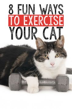 Do you have a fat cat? Do you have a frisky kitten? Whatever type of feline friend you share your home with, it's important to incorporate exercise into your cat's daily routine to keep his mind and body...