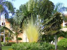 Palmeira Brasil: Sementes de Palmeiras, Árvores e Flores!!!