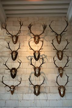 TheFullerView - Come Together (by zoreil) Trophy Display, European Mount, Deer Mounts, Trophy Rooms, Deer Skulls, Lodge Decor, Rustic Elegance, Antlers, Candle Sconces