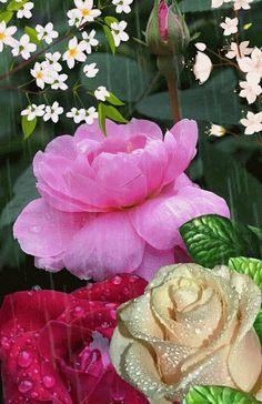 Com todo meu amor , e todo meu calor, perfumes de flores! Amor, muito amor, eterno!