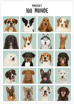 Poster 100 Hunde (100 Dogs) Vol2