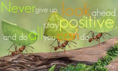 Wow, what a great philosophy to have – the ant philosophy.  Never give up, look ahead, stay positive and do all you can.