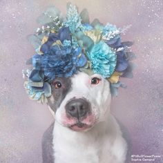 Awe what a cute pretty baby if I was a Pitbull I would be her