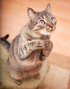 gatti divertenti foto - Cerca con Google