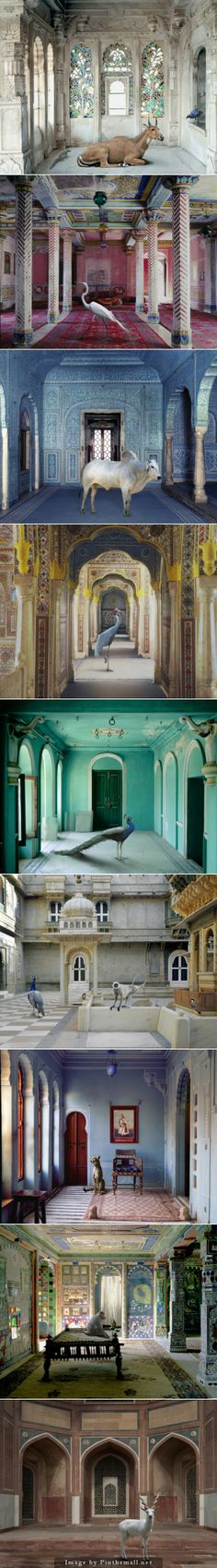 After a life-changing journey to Rajasthan in 2008, artist Karen Knorr wanted to celebrate the visual richness found in the fables, myths and stories of northern India using sacred and secular sites to highlight the caste system, femininity and its relationship with the animal world. Interiors of palaces, mausoleums, and holy sites were photographed with a large format camera and a variety of animals were photographed separately in sanctuaries and zoos.