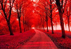 This one is very cool looking and so beautiful with the red gorgeous trees . and the leaves all over the street.