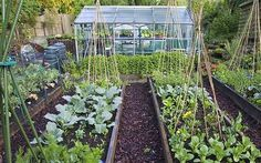 Do you grow as much winter veg as you could? Growing fabulous rows of a wide   choice of feisty vegetables stops the garden becoming just a window   landscape and gives it real purpose.