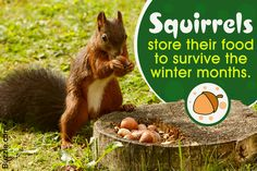 Though they are innocent-looking fluffy little critters, squirrels can actually destroy your garden by digging up the bulbs and feeding on the buds. Here are some recipes for preparing homemade squirrel repellents. Garden Tools List, Garden Tool Shed, Garden Tool Storage, Raccoon Repellent, Get Rid Of Squirrels, Homemade Bird Houses, Tulip Bulbs, Humming Bird Feeders, Garden Pests