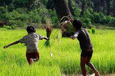 #Rice #Cambodia #Cluster #Expo2015
