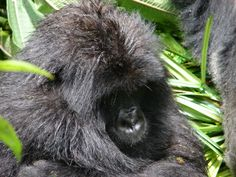 Notes from the field: Kanama Recovers