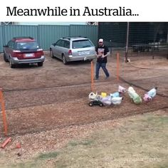 Chicken Run - Funny Husky Meme - Funny Husky Quote - Unless that little truck has chicken feed dribbling out of it I have no idea why those chickens are chasing that little truck. Funny Animal Memes, Funny Animal Videos, Cute Funny Animals, Funny Animal Pictures, Funny Cute, Funny Jokes, Hilarious, 9gag Funny, Funniest Pictures