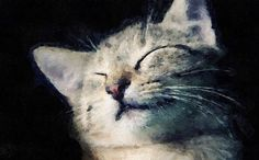 """"""" Sweet laziness"""" Handmade oilpainting of your cat."""