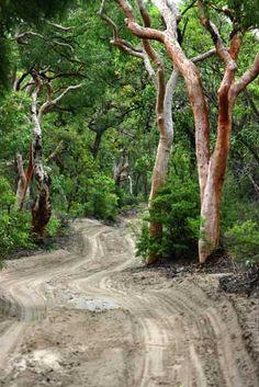 Fraser Island.  #fraserisland #queensland #australia www.fraserisland.net