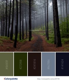 Color Palette Ideas from Forest Spruce Fir Ecosystem Image Colour Pallette, Colour Schemes, Color Combos, Paint Colors For Home, House Colors, Forest Color, Misty Forest, Skateboard Design, Lanyards