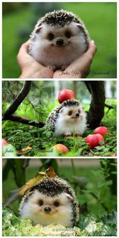 Lovely!! This hedgehogs face is hilarious!!!