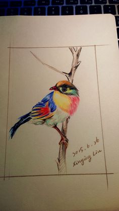 Painting of Coloured Pencil - Colourful Bird