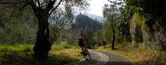 #Laghel, una valletta che sale accanto al #castello di #Arco, è ricca di vecchi #olivi che la trasformano in un'oasi di pace. #Laghel is a small valley beside the #castle of #Arco and it is known for its lanscape characterised by ancient olivetrees.#mountaingardabike