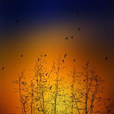 Birds by Luis Mariano González on 500px