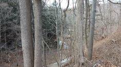 Turkey Run Creek 2-15-15