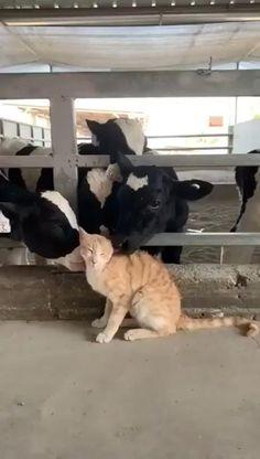 Cute Wild Animals, Cute Little Animals, Cute Funny Animals, Animals Beautiful, Animals And Pets, Cute Cats, Pretty Cats, Beautiful Cats, Cute Animal Videos