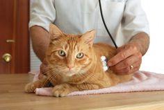 #petplace #catcare #vettips #elderlycatcare #cathealth #catwellness Asthma, Cat Cpr, Cat Symptoms, Leukemia Symptoms, Cat Diseases, Best Pet Insurance, Healthy Pets, Cat Facts, Cat Health
