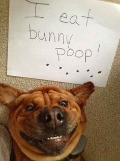 An epic gallery of funny dog shaming photos that prove these dogs are the naughtiest in the world. The best dog shaming picture gallery ever. Love My Dog, Puppy Love, Funny Animal Pictures, Dog Pictures, Funny Animals, Cute Animals, Funny Photos, Animal Funnies, Dog Humor