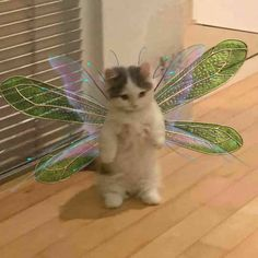 Cute Little Animals, Cute Funny Animals, Funny Animal Photos, Funny Animal Memes, Cat Aesthetic, Indie Kids, Cute Icons, Aesthetic Pictures, Cute Memes