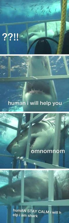 Sharks Aren't Always Bad // tags: funny pictures - funny photos - funny images - funny pics - funny quotes - #lol #humor #funnypictures
