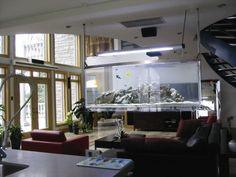 Wall Hanging Fish Tank: Alternative to a flat screen TV. $5000 #Fish_Tank