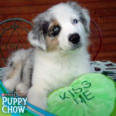 How can you resist that cute puppy face? Purina® Puppy Chow®