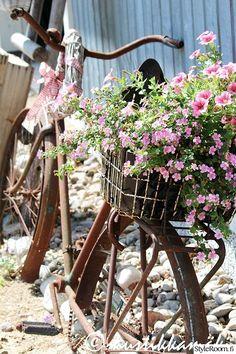 piha,puutarha,pihan istutukset,kesäkukat,roosat kukat,pyörä,polkupyörä,istutus